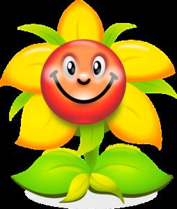 bio garten sonnenblume