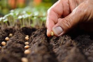 erste-Gemüseaussaat-im-März
