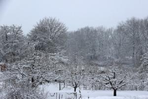 obstbaum winter