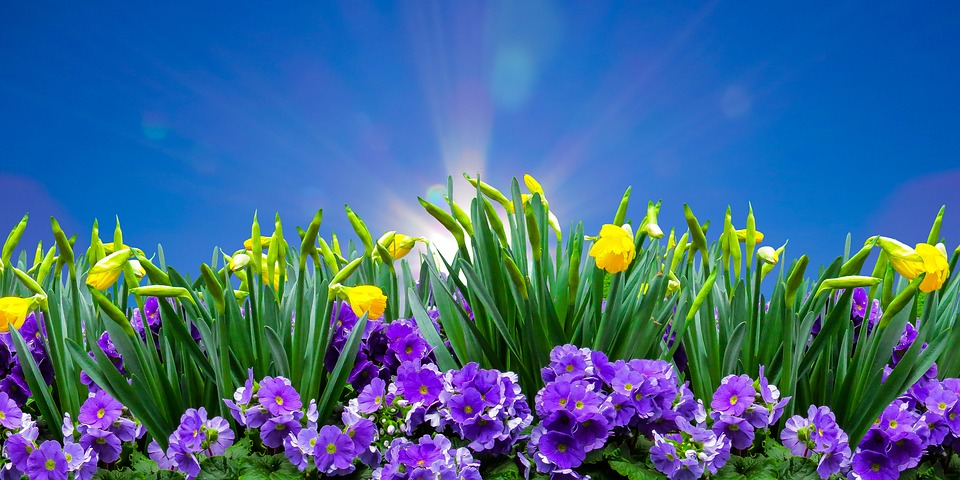 Dünger für Blumen