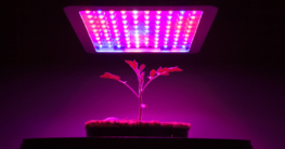 Pflanzenlampe Test und Vergleich