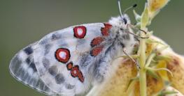 Artenschutz für Schmetterlinge