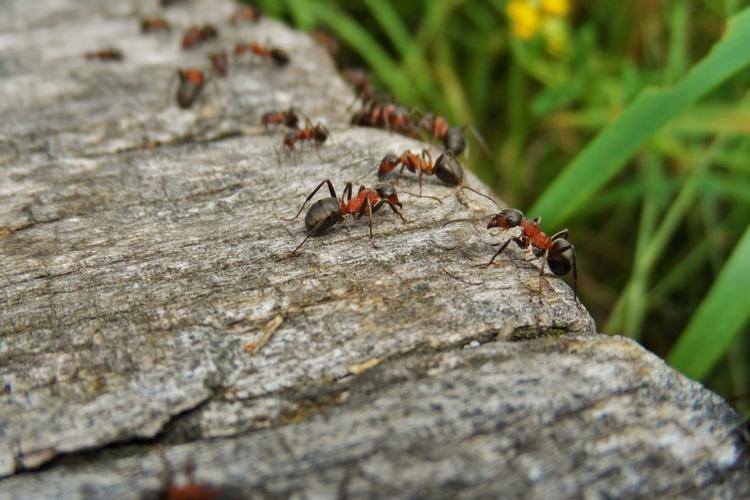 Ameisennest im Garten