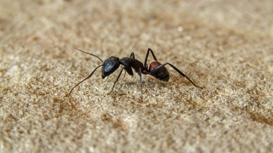 Hausmittel gegen Ameisen Top 10