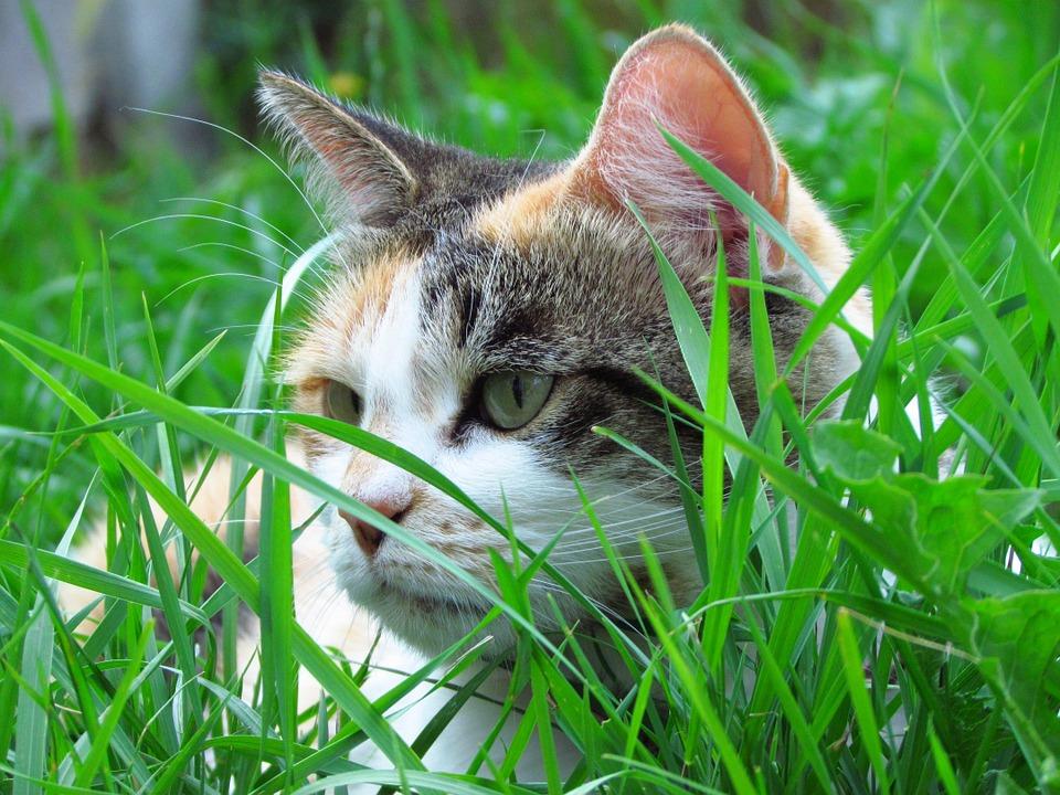 Katze versteckt sich im Garten
