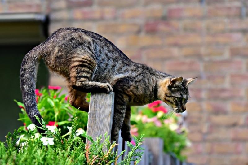 Katzenabwehr im Garten