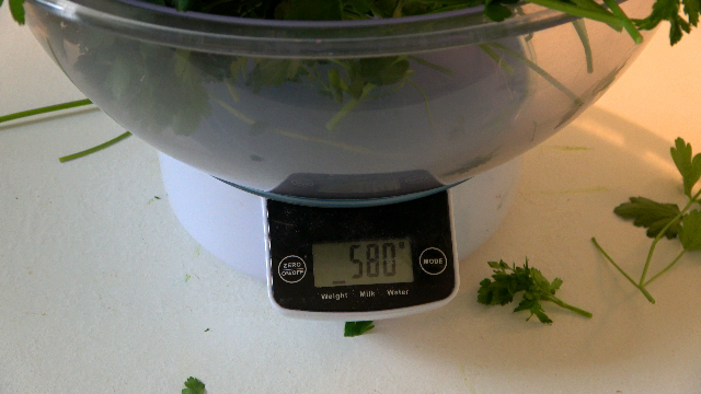 Petersilie ernte wiegt fast 600 gramm