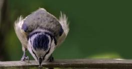 Vogeltränke für Garten und Balkon