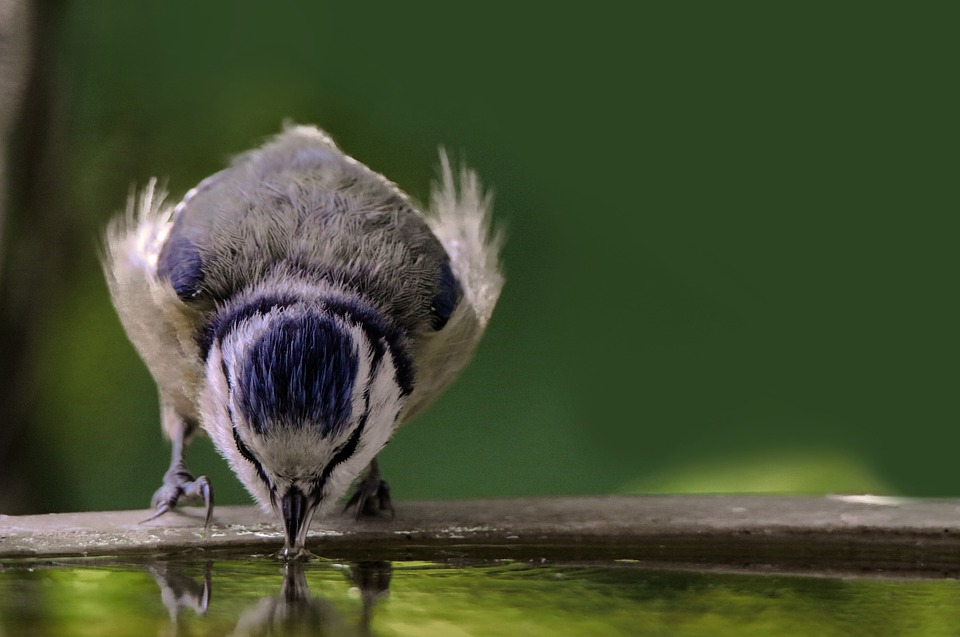 Beliebt Bevorzugt ᑕ❶ᑐ Vogel Wassertränke im Garten und auf dem Balkon #DV_08