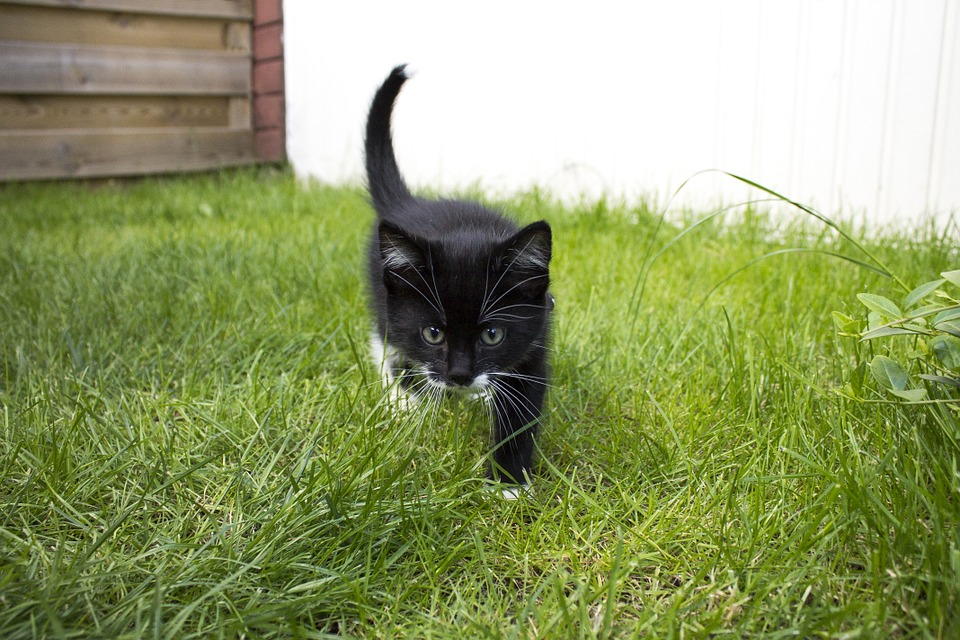 fremde Katze auf dem Grundstück