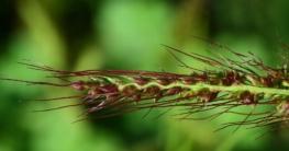 Grassamen Natur