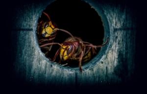Wespen loch