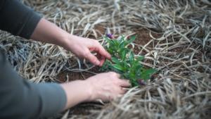 Bodenaktivator Anwendung