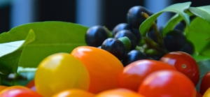 Kirschlorbeer Früchte
