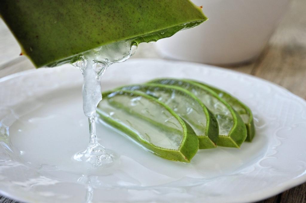 Aloe vera Heilmittel