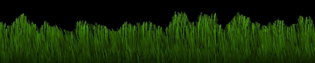 Rasen Lang
