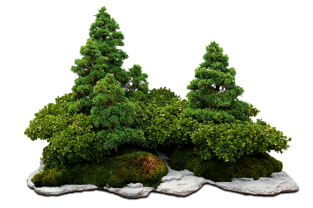 Dünger Bonsai