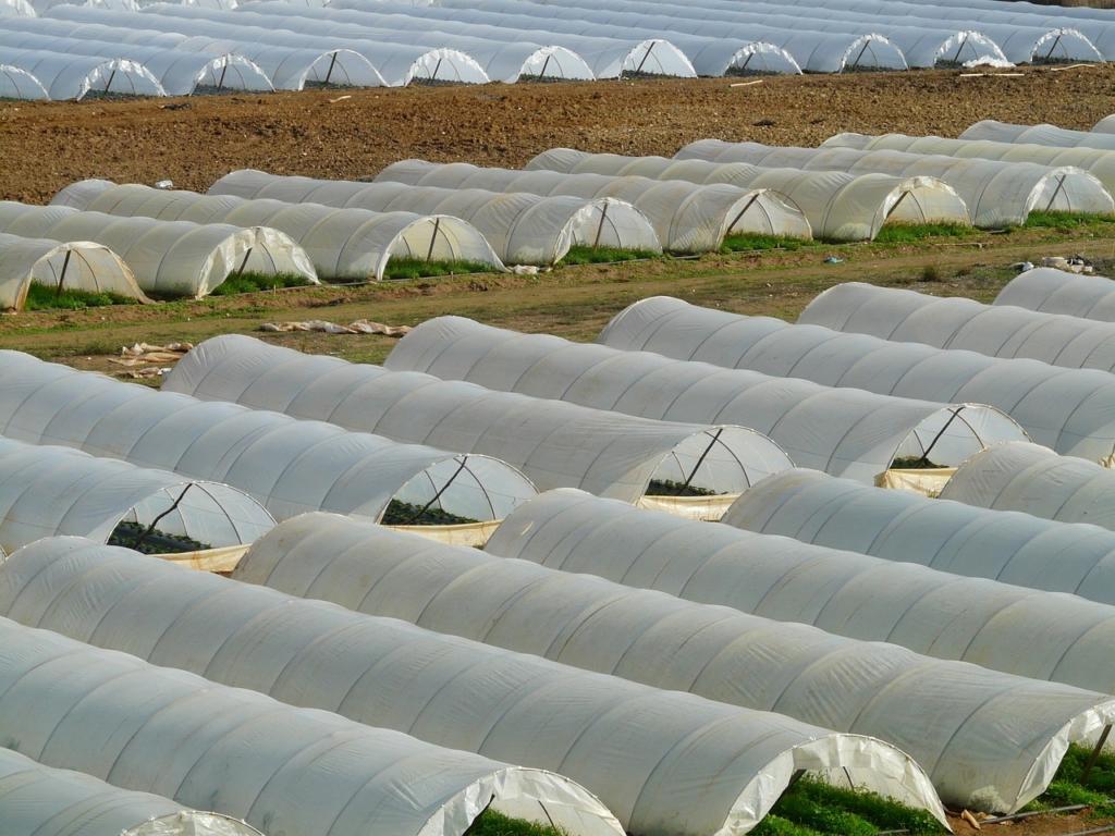 Foliengewächshaus farm