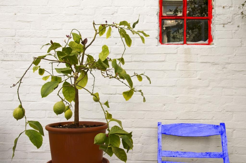 Zitronenbaum topf