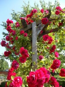 rosenspalier holz